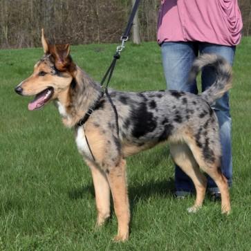 Trixie, Easy Walk, Szelki treningowe dla psa, różne rozmiary