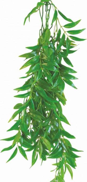 Happet, Terra Plant, Ficus longifolia