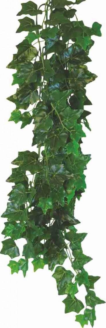 Happet, Terra Plant, Hedera helix