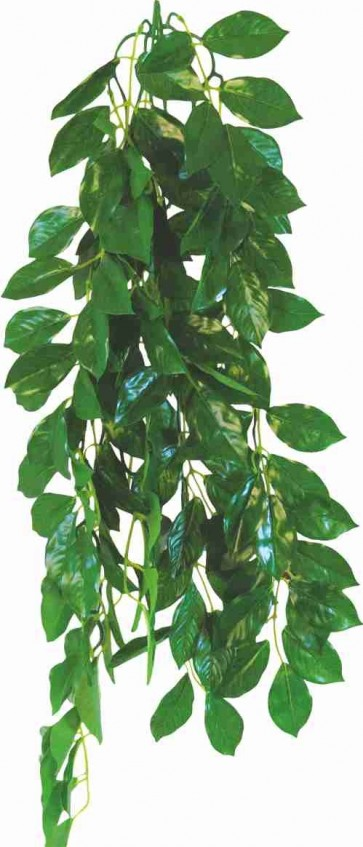 Happet, Terra Plant, Ficus