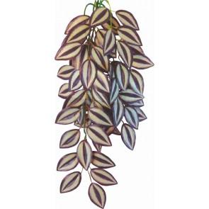 Happet, Terra Plant, Tradescantia zebrina