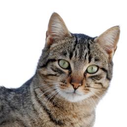 Sprawdź nasze produkty w kategorii kot