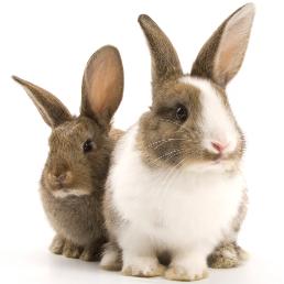 Sprawdź nasze produkty w kategorii króliki