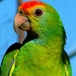 Sprawdź nasze produkty w kategorii ptaki